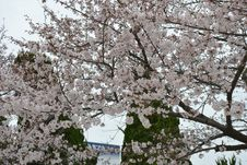 Free Spring In Kyoto, Japan Royalty Free Stock Images - 51958539