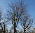 Free Bare Branches And Blue Sky Royalty Free Stock Image - 51986016