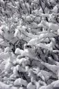 Free Snow Covered Bush Royalty Free Stock Photography - 522257