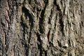 Free Tree Bark Royalty Free Stock Image - 525146