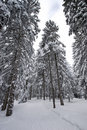 Free Path In Winter Forest Stock Photography - 528782