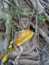 Free Buddha In A Tree Royalty Free Stock Image - 528956