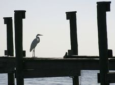 Great Egret On A Dock Royalty Free Stock Images