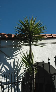 Free Palm Tree Stock Photography - 520322