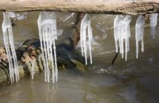 Free Long Icicles Stock Images - 521394