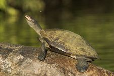 Free The Turtle And The Bee Stock Photo - 522560