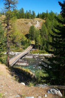 Bridge, Firs And River Stock Photo