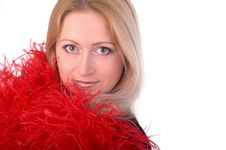 Free Red Feathers Stock Photography - 523422