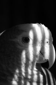 Free Parrot Stock Photography - 524072