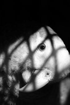 Free Parrot Stock Photos - 524073