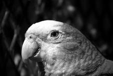 Free Parrot Stock Photo - 524080