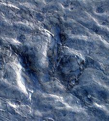 Free Dinosaur Footprint Stock Images - 524734