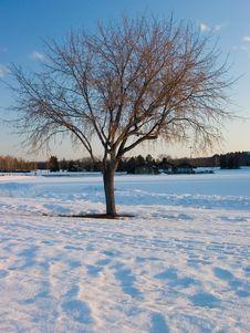 Free Winter Tree Stock Photos - 525023