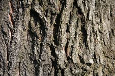 Free Tree Bark Royalty Free Stock Image - 525146