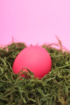 Free Egg In A Nest Stock Image - 525521