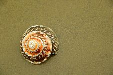 Free Spiral Shell On Sand Royalty Free Stock Photography - 526517