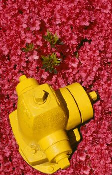 Free Hydrant And Azaleas Stock Photo - 527520
