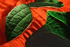 Free Red And Green Stock Photography - 528012