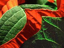 Free Red And Green Stock Photos - 528013