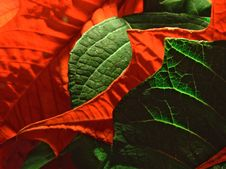 Free Red And Green Stock Images - 528014