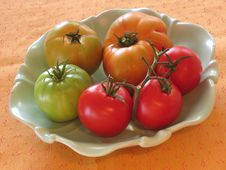 Free Tomatoes Royalty Free Stock Photos - 528538