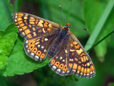 Free Euphydryas Aurinia. Royalty Free Stock Image - 528886