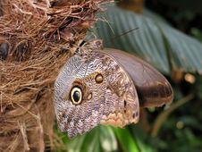 Free Moth On Palm Tree Stock Photography - 529262