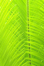 Free The Light Green Leaves Royalty Free Stock Photography - 5205967