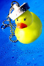 Free Sailor Ducky Stock Photos - 5206513