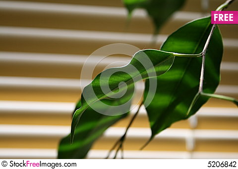 Free Green Leaf Stock Photography - 5206842