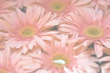 Free Daisies Faded Stock Image - 5200891