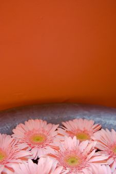 Free Daises In Bowl Royalty Free Stock Photo - 5200945