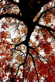 Free Autumn Leaves Royalty Free Stock Images - 5201269
