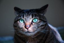 Free Close Up Face Of A Happy Gray Tabby Cat Royalty Free Stock Photography - 5201277