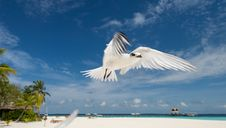 Free Flying Seabird Royalty Free Stock Images - 5201359