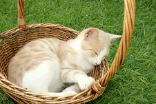 Free Kitten Stock Photography - 5201662