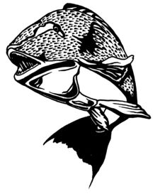 Free Illustration Of A Grouper Stock Image - 5201981
