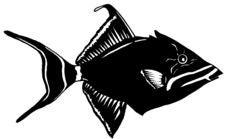 Free Trigger Fish Iliustration Stock Photo - 5202010