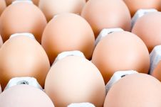 Free Brown Eggs, Isolated Stock Image - 5202241