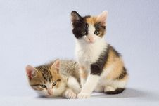 Free Two Kittens, Isolated Stock Images - 5202574