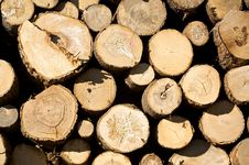 Free Cut Pine Royalty Free Stock Photo - 5203665