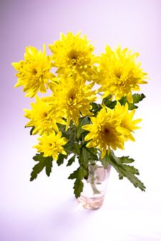 Free Yellow Chrysanthemum In The Glass Royalty Free Stock Images - 5203749