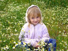 Little Girl And Camomiles. Stock Photography