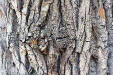 Free Natural Texture. Bark. Royalty Free Stock Image - 5204926