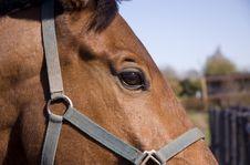 Free Horse Stock Image - 5205201