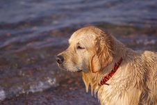 Free Wet Dog Stock Photos - 5205663