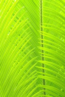 The Light Green Leaves Royalty Free Stock Photography
