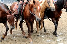 Free The Walking Horses Stock Images - 5206354