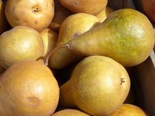 Free Organic Pears Stock Photography - 5206372