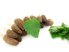 Free Morels And Nettles Royalty Free Stock Photos - 5206498